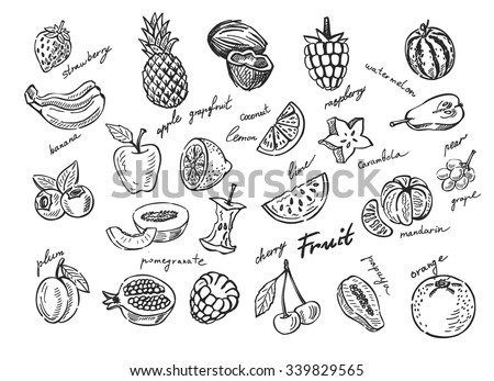 vector hand drawn fruit sketch doodle set - stock vector