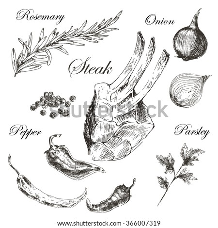 vector hand drawn ribs with rosemary, onion, pepper, parsley. realistic food sketch - stock vector