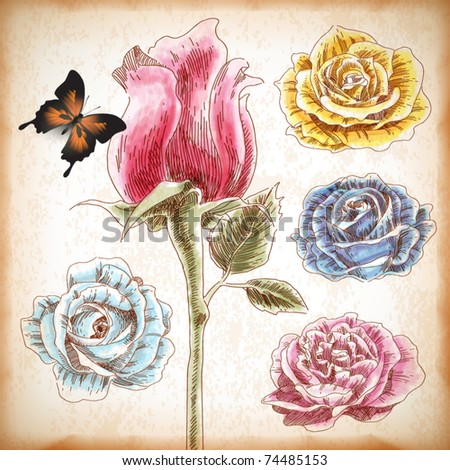 Vector Hand Drawn Roses - stock vector