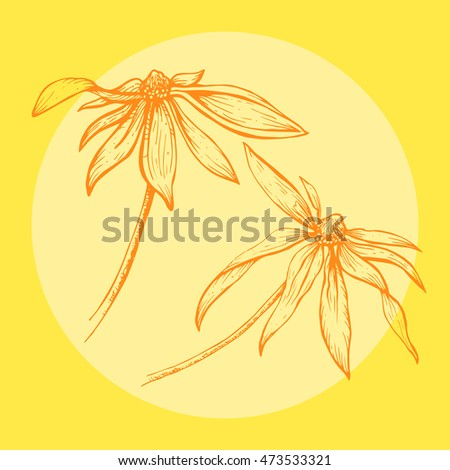 Vector hand drawn sketch of the orange flowers with circle frame on the yellow background. Linear illustration of the beautiful summer flowers.