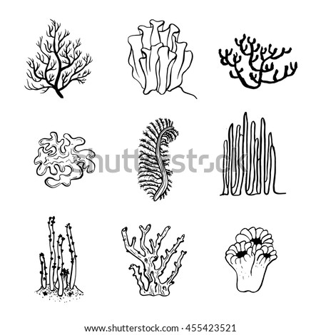 Coral Reef Vector Stock Photos Royalty Free Images Amp Vectors