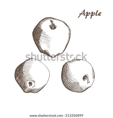 vector hand drown apple - stock vector
