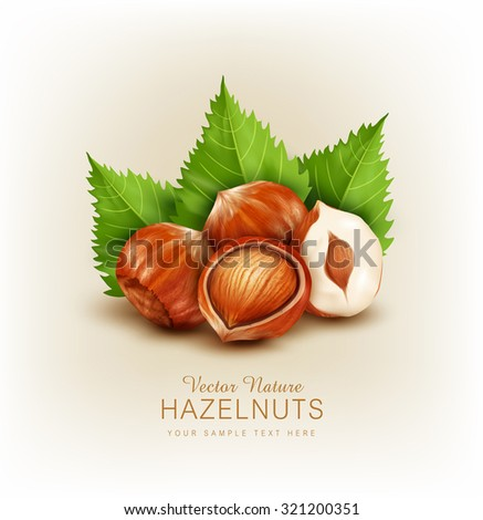 vector hazelnut isolated (element for design) - stock vector