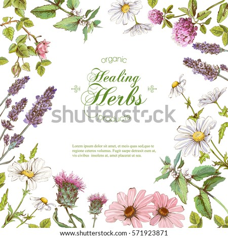 Vector healing flowers and herbs frame. Design for herbal tea, natural cosmetics, perfume, health care products, homeopathy, aromatherapy. With place for text