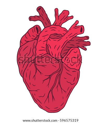 human heart drawing stock images, royalty-free images & vectors, Muscles
