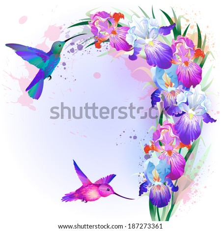 Vector holidays Card with bright multicolored Iris flowers and hummingbirds - stock vector