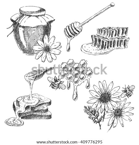 vector honey elements set. hand drawn honey jar, spoon, stick, cells, camomile. ink sketch of organic nature products - stock vector
