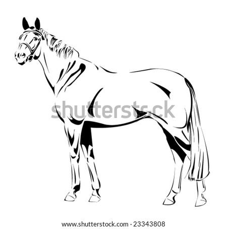 vector horse - stock vector