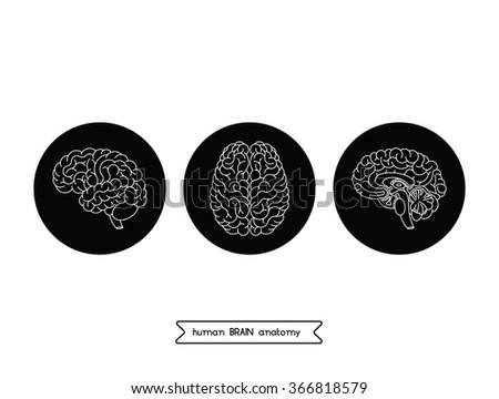 Vector human brain views. Illustration of human brain  for medical design or idea for logo design. Easy recolor. - stock vector