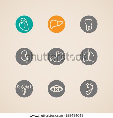 vector human organ icons set  - stock vector