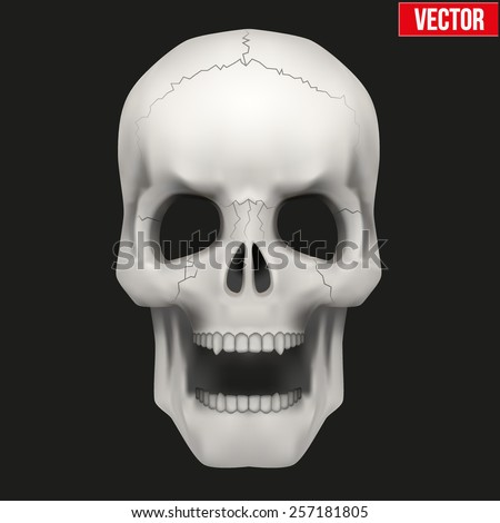 Vector Human skull with open mouth. Illustration isolated on background