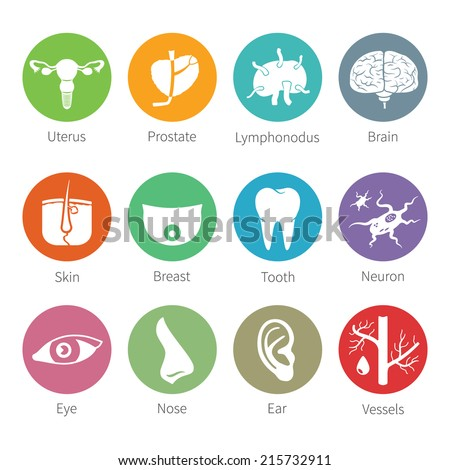 Vector icon set of human internal and external organs like uterus prostate brain skin breast tooth eye neuron nose ear blood vessel and lymphonodus in flat style - stock vector