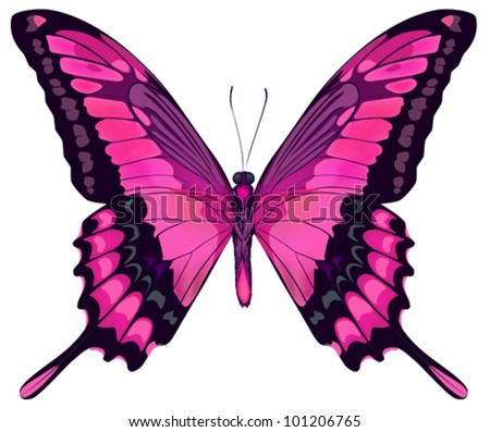 Vector Iillustration of Beautiful Pink Butterfly Isolated on White Background - stock vector