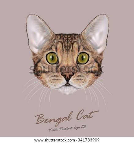 Vector Illustrated Portrait of Bengal Cat. Cute face of Domestic purebreed Brown-spotted color cat on natural background - stock vector