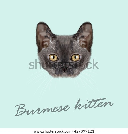 Vector Illustrated Portrait of Burmese kitten. Cute blue face of domestic cat on blue background. - stock vector