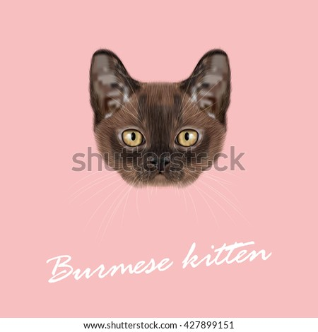 Vector Illustrated Portrait of Burmese kitten. Cute Sable face of domestic cat on pink background. - stock vector