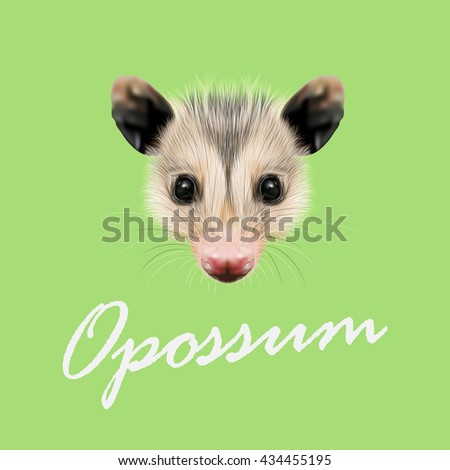 Vector Illustrated Portrait of Opossum. Cute fluffy face of Opossum on green background. - stock vector
