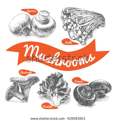 Vector illustrated Set #2 of Mushrooms. Illustrative sorts of mushrooms - stock vector
