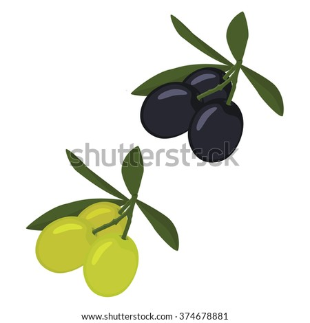 Vector illustration branch of green and black olives with leaves or cooking, gastronomy, oil and vegetarian design.