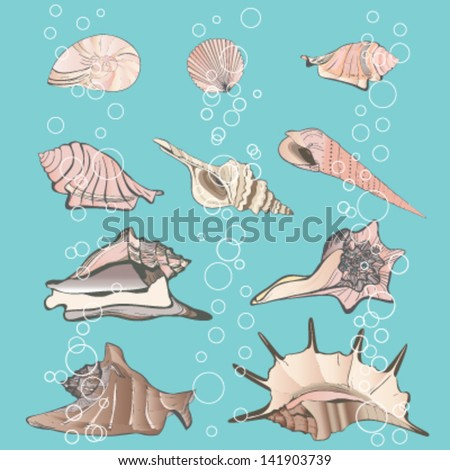 Vector illustration color shells