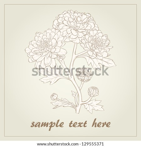 Vector illustration for greeting card with chrysanthemum.