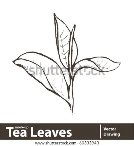 Vector illustration. Fresh green tea leaf isolated on white background - stock vector