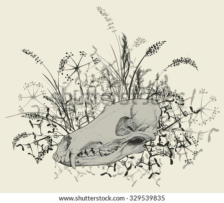 Vector illustration. Hand drawing of a skull of a predator among the grasses. On a light background. - stock vector