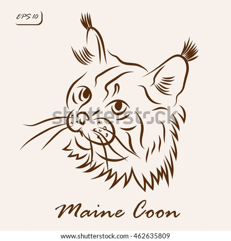 Vector illustration. Illustration shows a cat breed Maine Coon