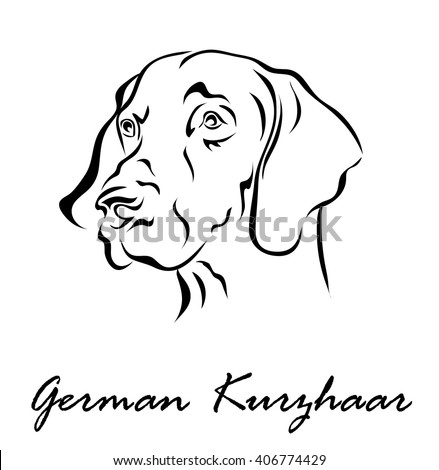 Vector illustration. Illustration shows a dog breed German Kurzhaar
