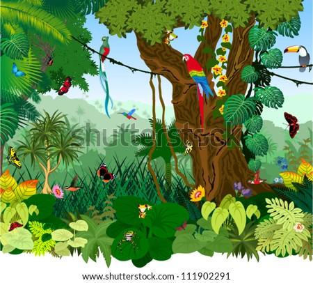 Vector Illustration Jungle with Frog, Toucan, quetzal, humming-birds, butterflies , Ara and flowers - stock vector