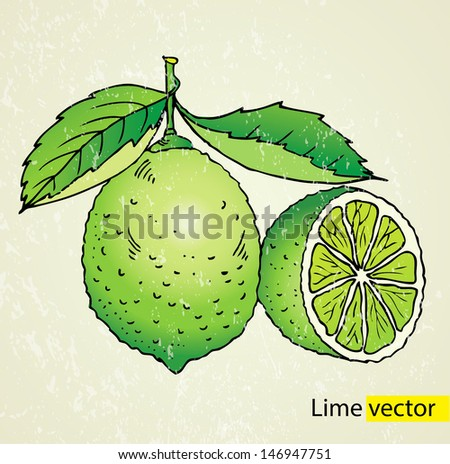 Vector illustration lime green - stock vector