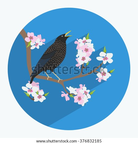 Vector illustration of a bird made in flat style. Starling on a branch. Cherry blossoms. Icon or postcard.  - stock vector