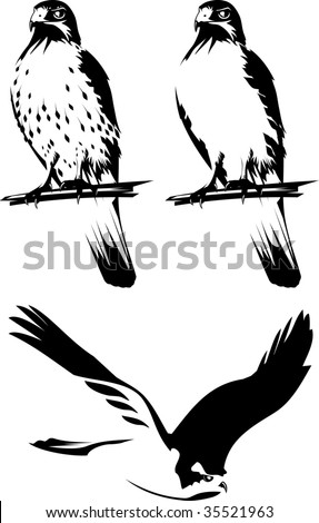 Vector illustration of a birds of prey. Black and white.