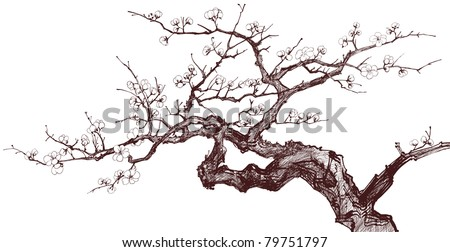 Vector illustration of a Blossoming Cherry Tree (inked drawing) - stock vector