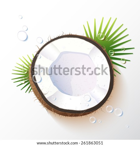 Vector illustration of a coconut  with water drops and palm branches, realistic design, minimalistic style, isolated object on a white background - stock vector