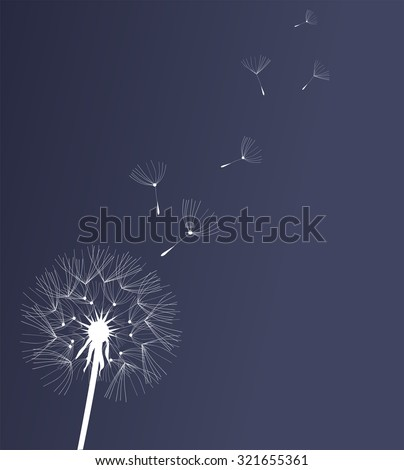 vector illustration of a dandelion flower - stock vector
