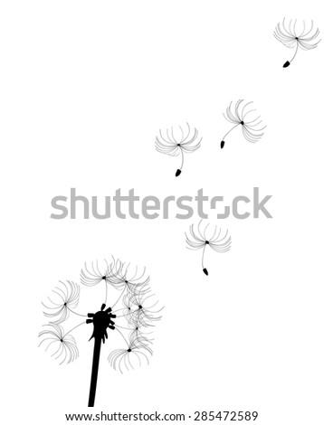 vector illustration of a dandelion flower silhouette - stock vector