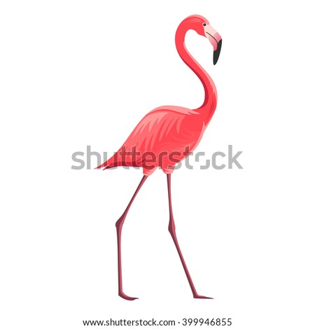 Vector Illustration of a Flamingo - stock vector