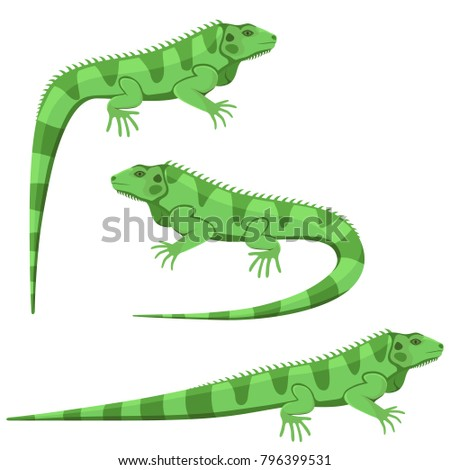 Vector illustration of a green iguana in three different positions isolated on a white background.