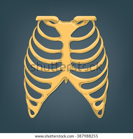 vector illustration of a human thorax - stock vector