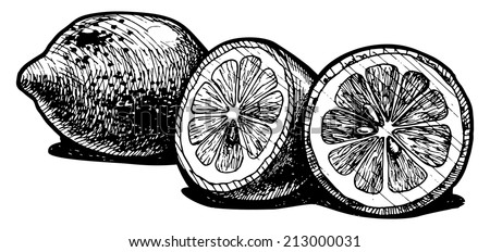 Vector  illustration of a lemon  stylized as engraving.  - stock vector