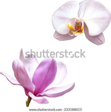 Vector Illustration of a magnolia flower, White orchid isolated on white background - stock vector