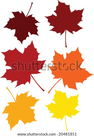 Vector illustration of a maple leaf is six different fall colors - stock vector