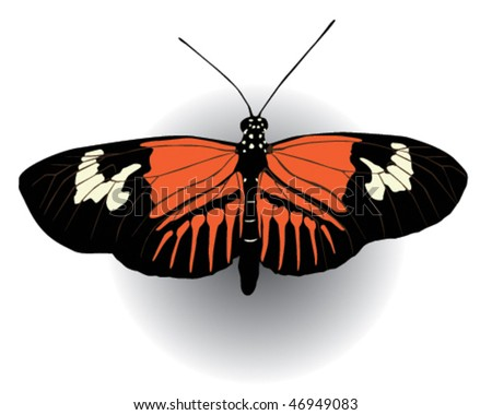 Vector illustration of a postman butterfly with open wings.