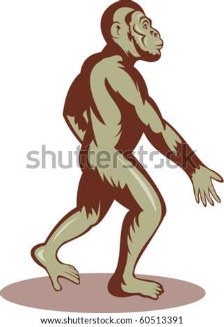 vector illustration of a Prehistoric man or ape walking upright - stock vector
