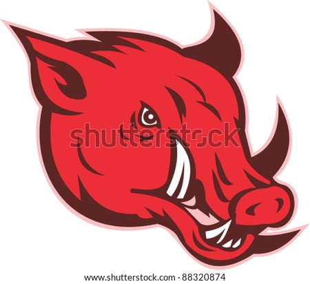 vector illustration of a razorback wild pig hog boar head with big tusk facing side on isolated white background - stock vector