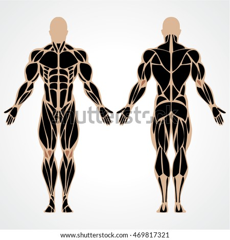 Vector Illustration Strong Muscular Man Bodybuilding Stock ...