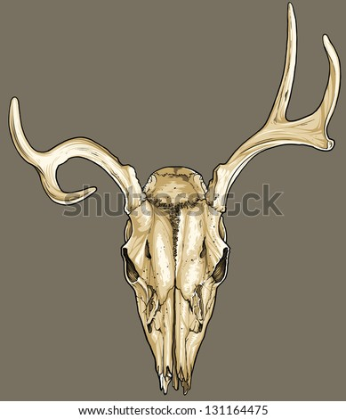 Vector illustration of an isolated deer skull (front view). - stock vector
