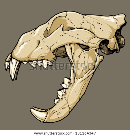Vector illustration of an isolated lion skull (profile view). Black line work has been grouped separately from color (which has also been grouped). - stock vector