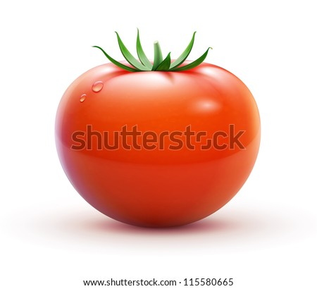 Vector illustration of big ripe red fresh tomato  isolated on white background - stock vector